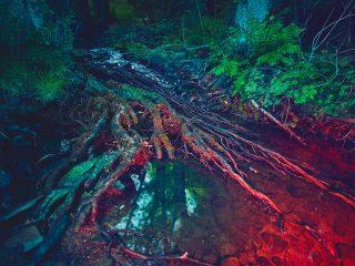 Andreas Hempel - Neon Woods - Showcase, Landscape, Projects